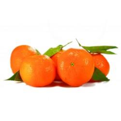 650 g Sirup s příchutí pomerančů a stévií