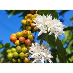 250 g Káva Brazílie Bori