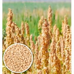 100 g BIO Quinoa bílá vločky z Bolívie