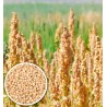 100 g Quinoa bílá