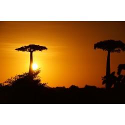 100 g Baobab prášek BIO, Zimbabwe