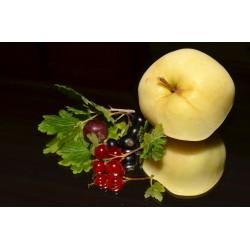 3 l Bohemia mošt - kombinace jablko a černý rybíz